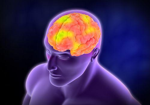 Brain activity (computer illustration).