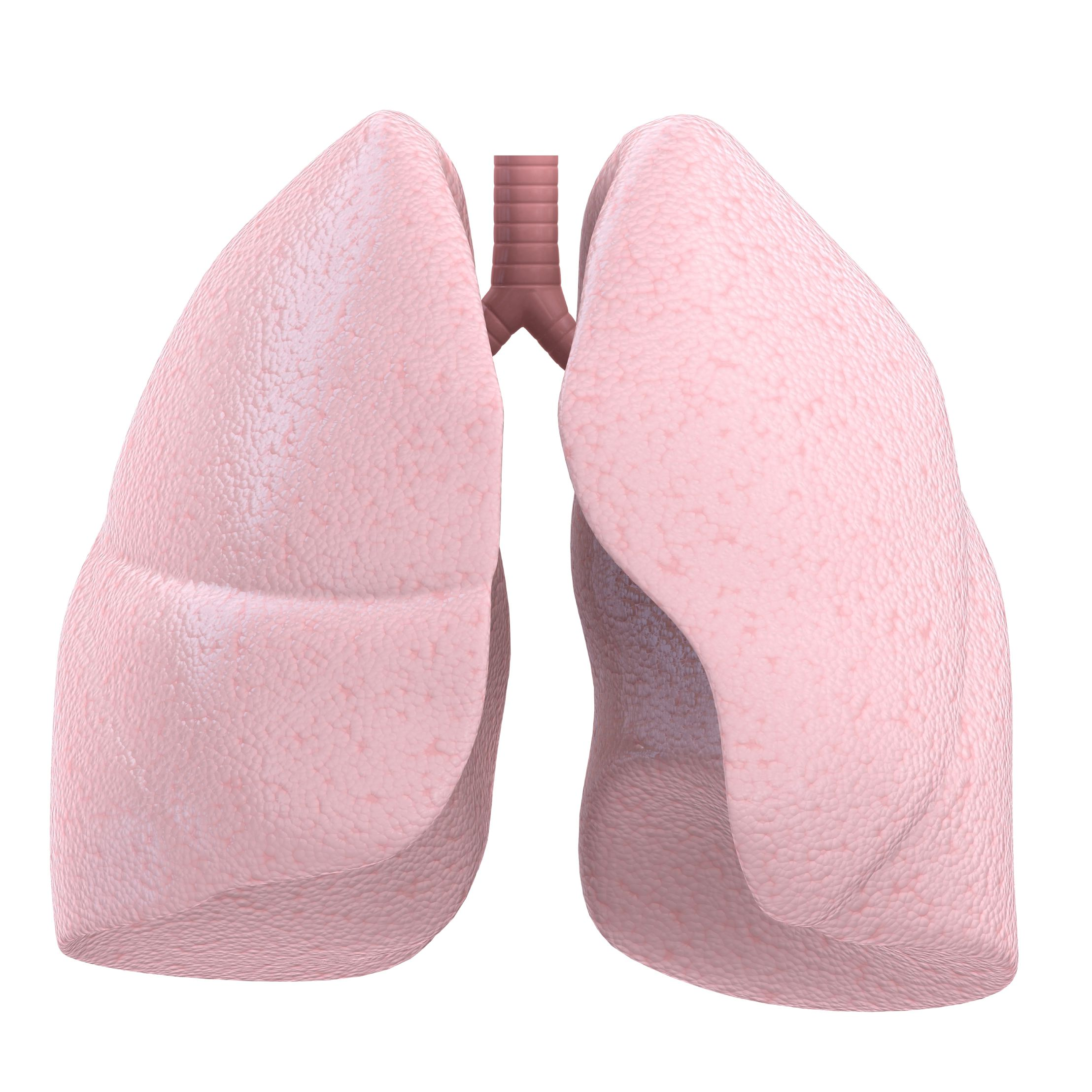 Hilum of the Lung: Definition, Anatomy, and Masses