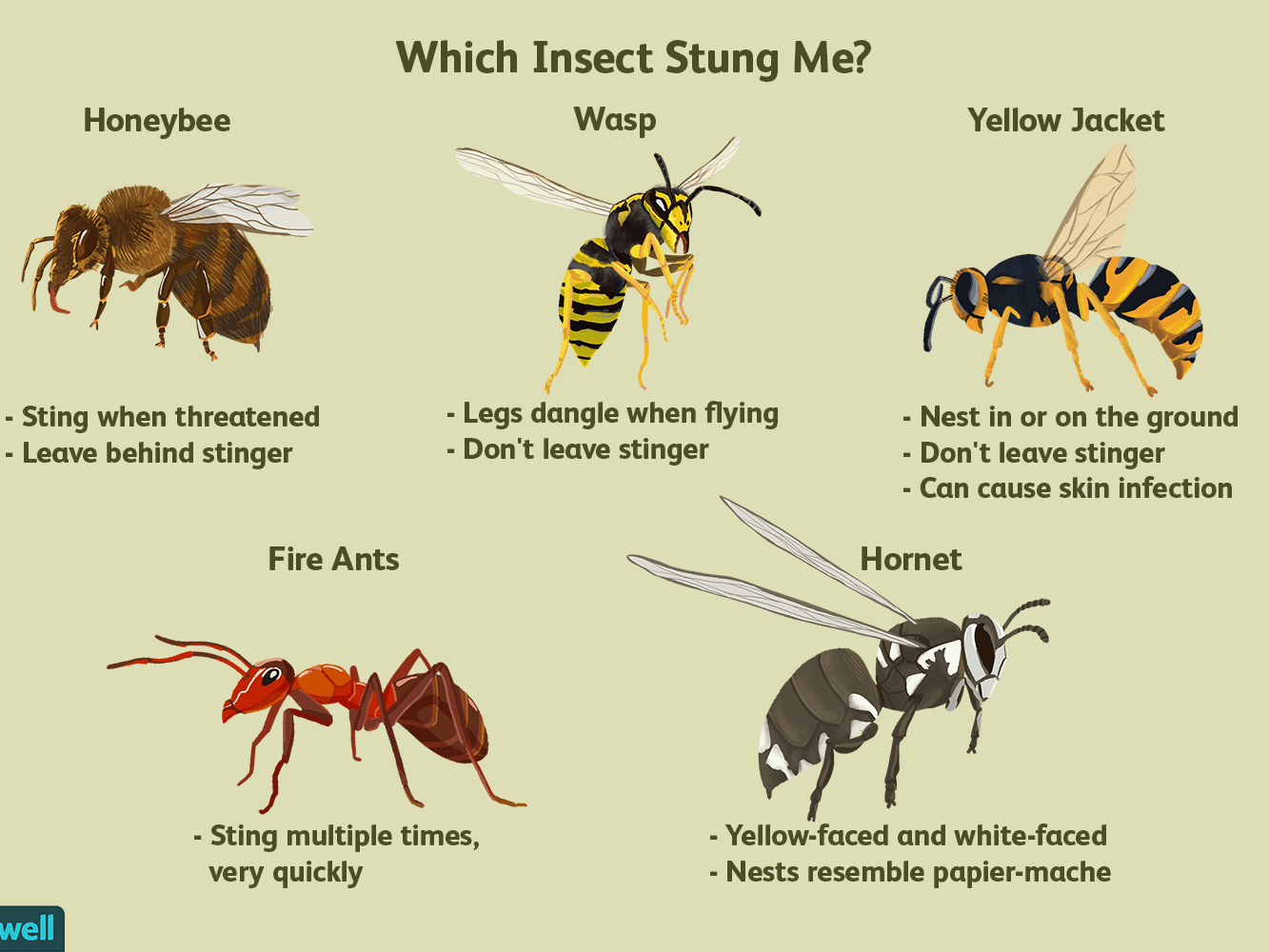 how do i know which kind of insect i was stung by 5c4e3f1cc9e77c0001d7bae4