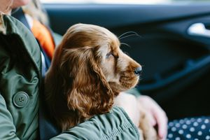 Emotional support dog with companion