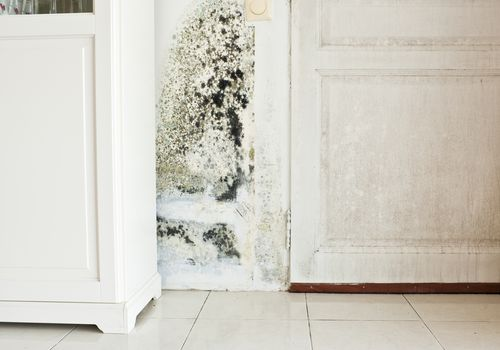 Mold Growth on Wall and Damp Stained Wood Door