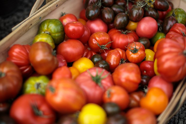basket of different varieties of tomatoes