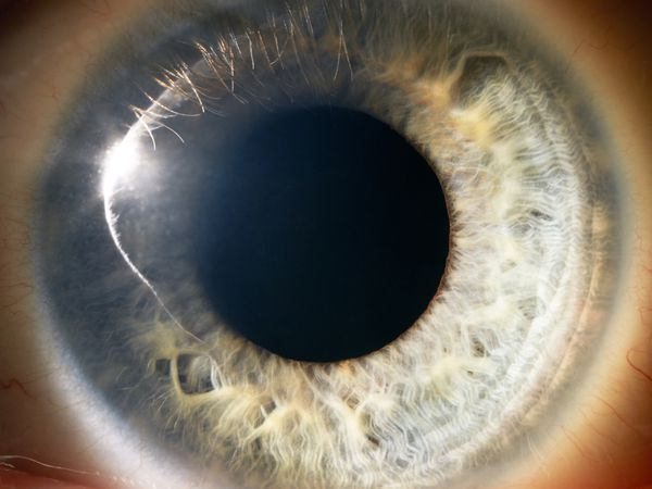 Close up of the iris and pupil.