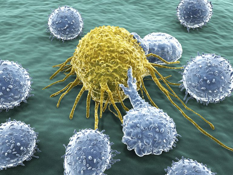 close up of white blood cells