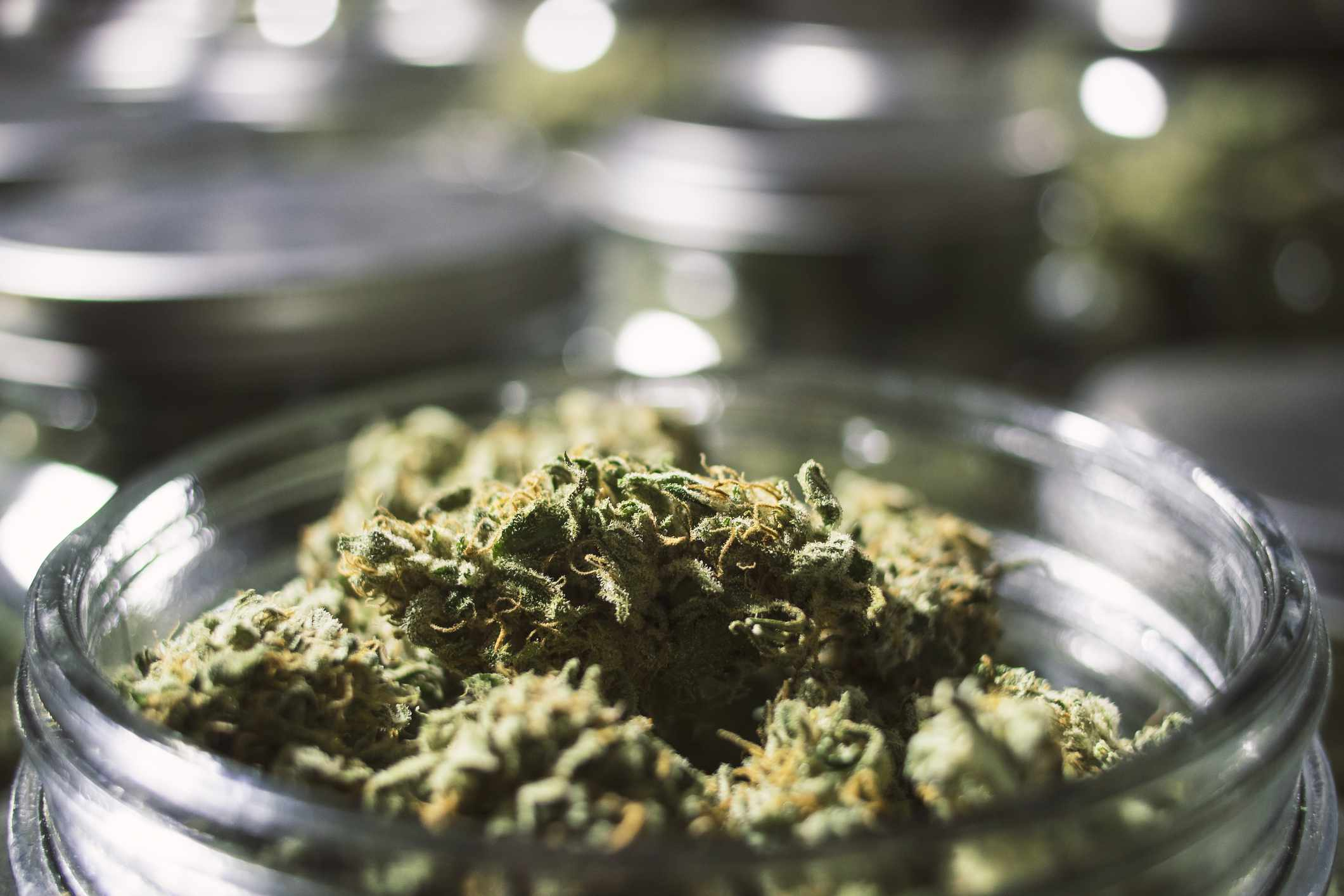 Is Medical Marijuana for Pain Legal In My State?