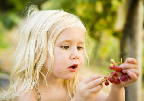 Small girl eating grapes