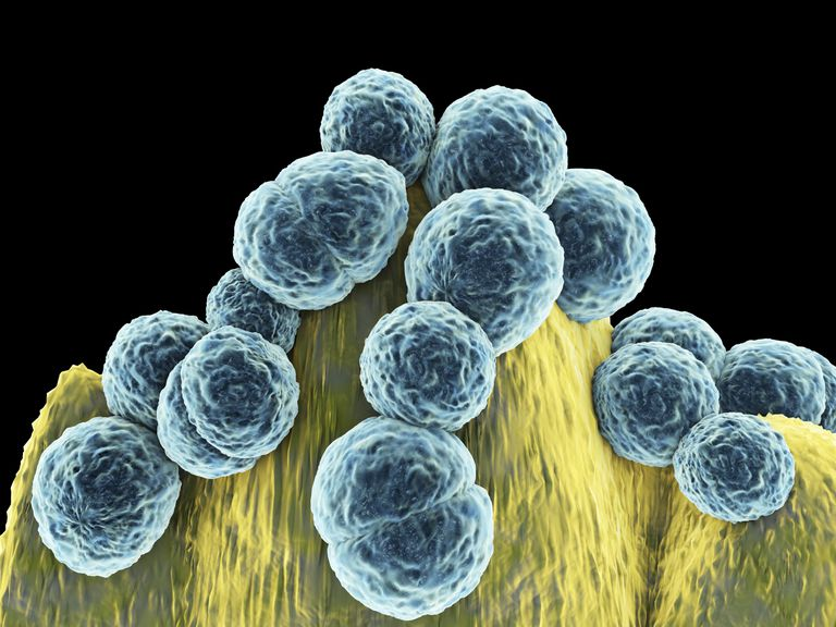 bacterial growing culture and stds