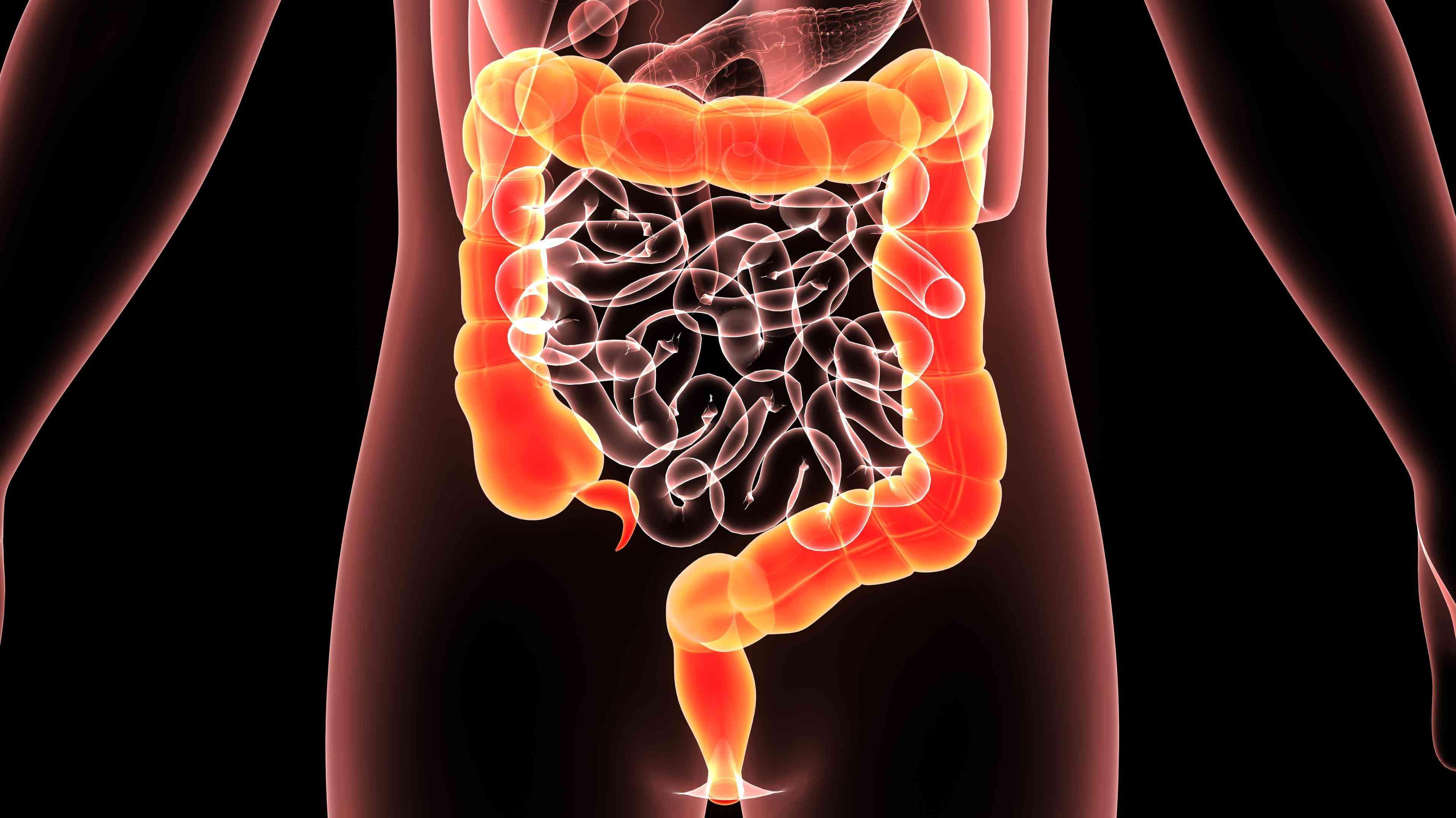 Diagram of a human colon
