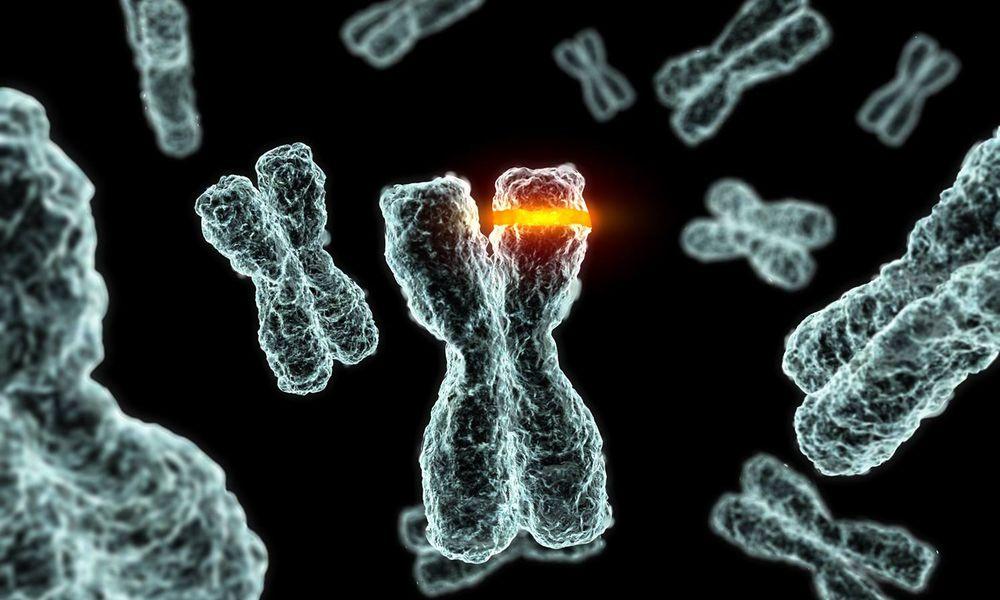 chromosomes and genes