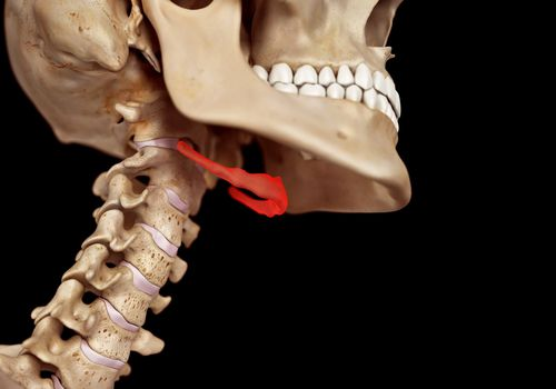 Hyoid bone and neck anatomy