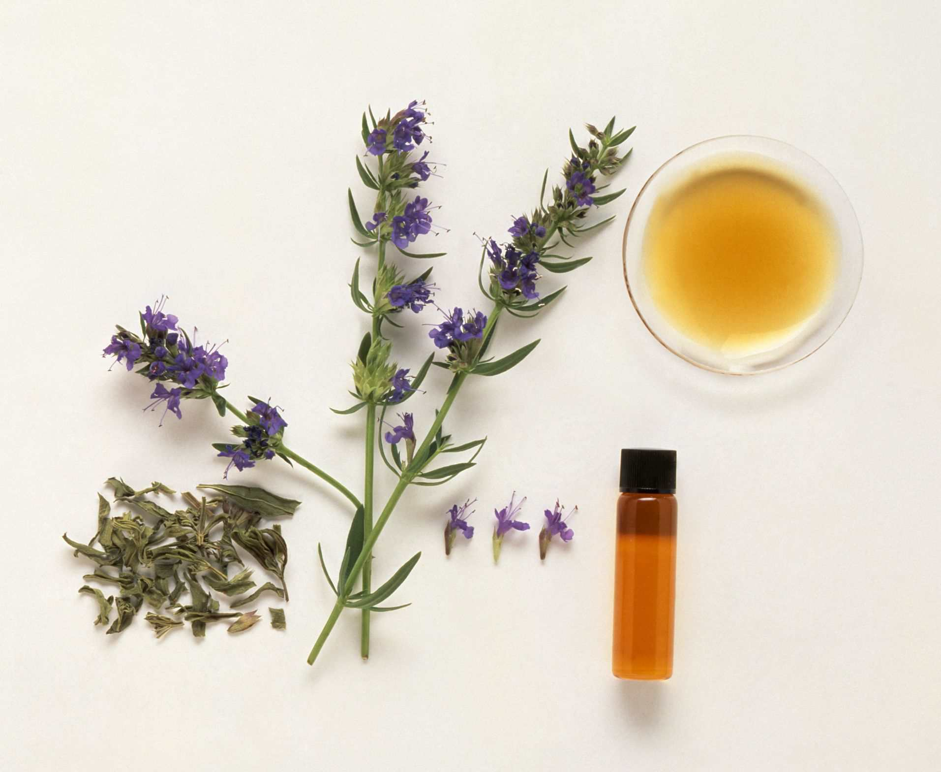 Hyssop: Benefits, Side Effects, Dosage, and Interactions