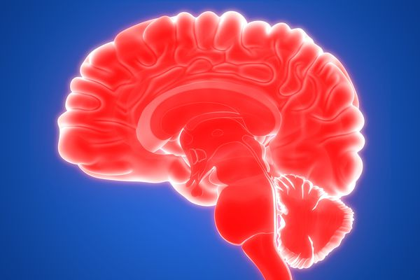 The choroid plexus in the ventricles of the brain