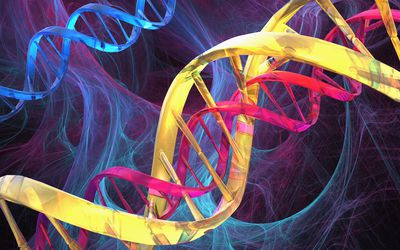 Three DNA double helices are shown in bright colors