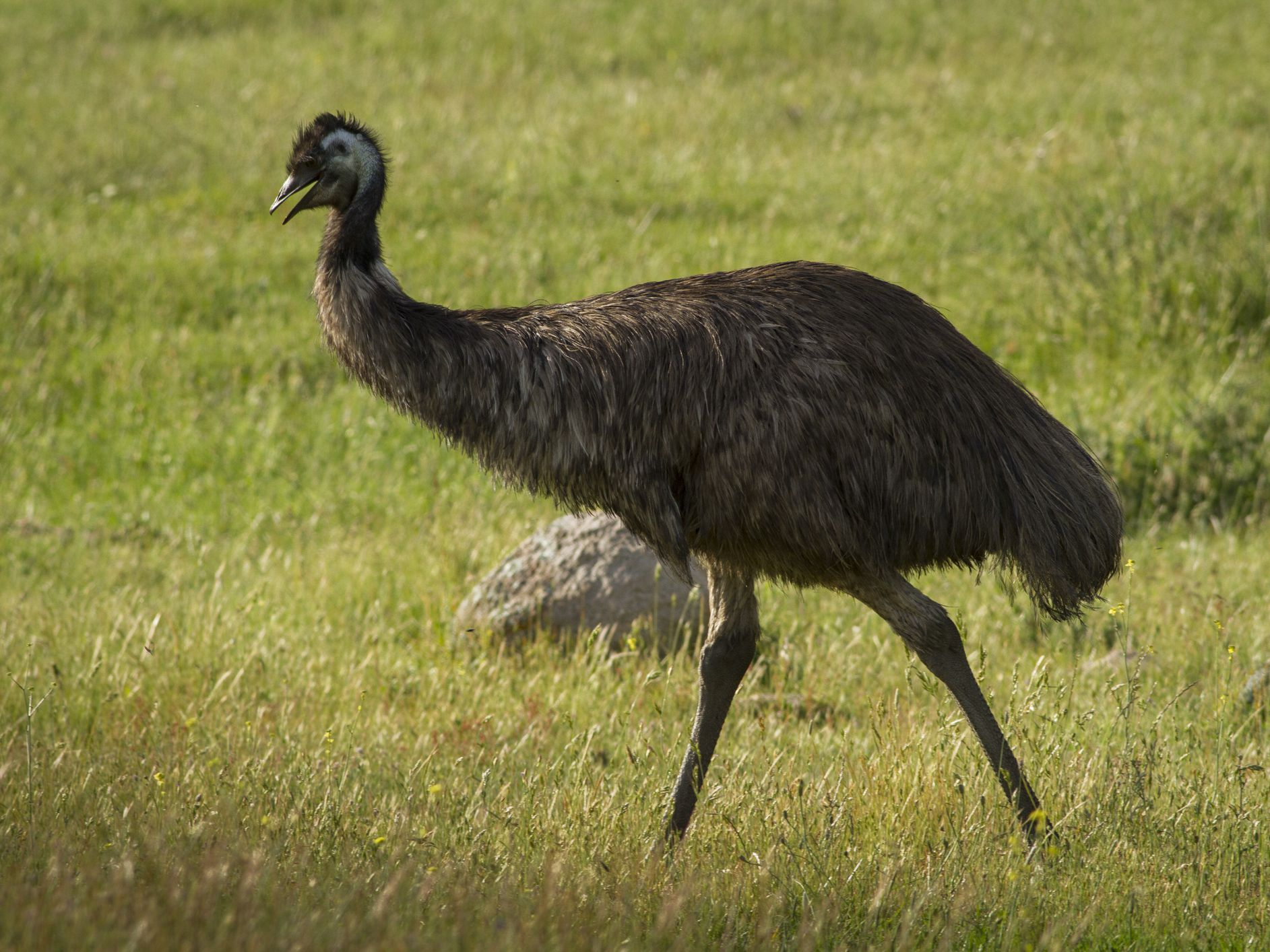 Blue-Emu Topical Pain Reliever