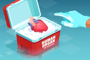An illustration of a donated heart in a cooler labeled