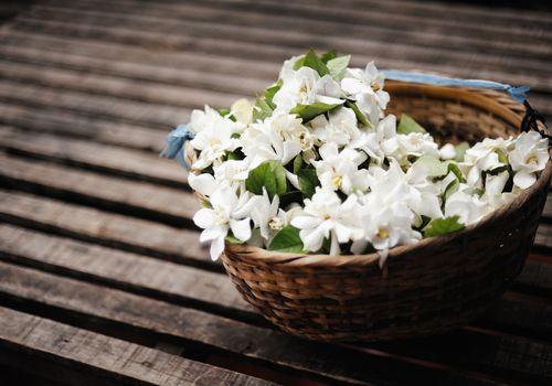 Basket of jasmine