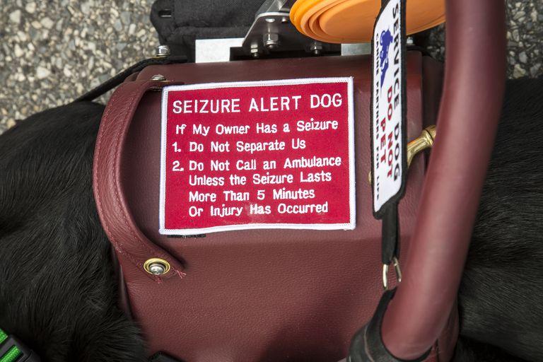 Seizure Alert Dog Harness - 5880