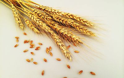 How to Identify Gluten on Food Labels