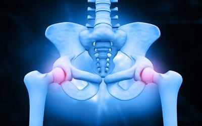 3d illustration of hip skeleton