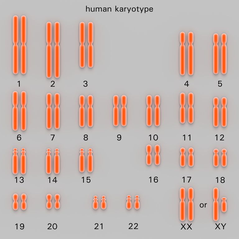Human karyotype, artwork