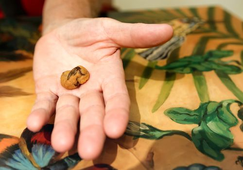 Cricket cookie in someone's hand
