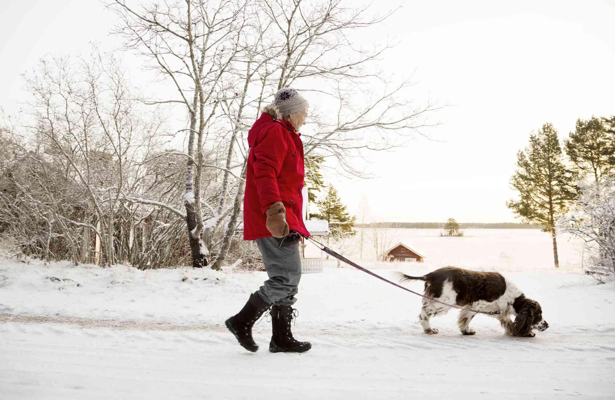 Senior woman walking dog in the snow