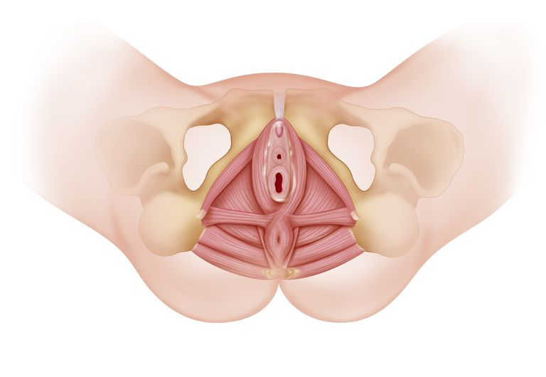 The Importance Of The Perineum In Childbirth