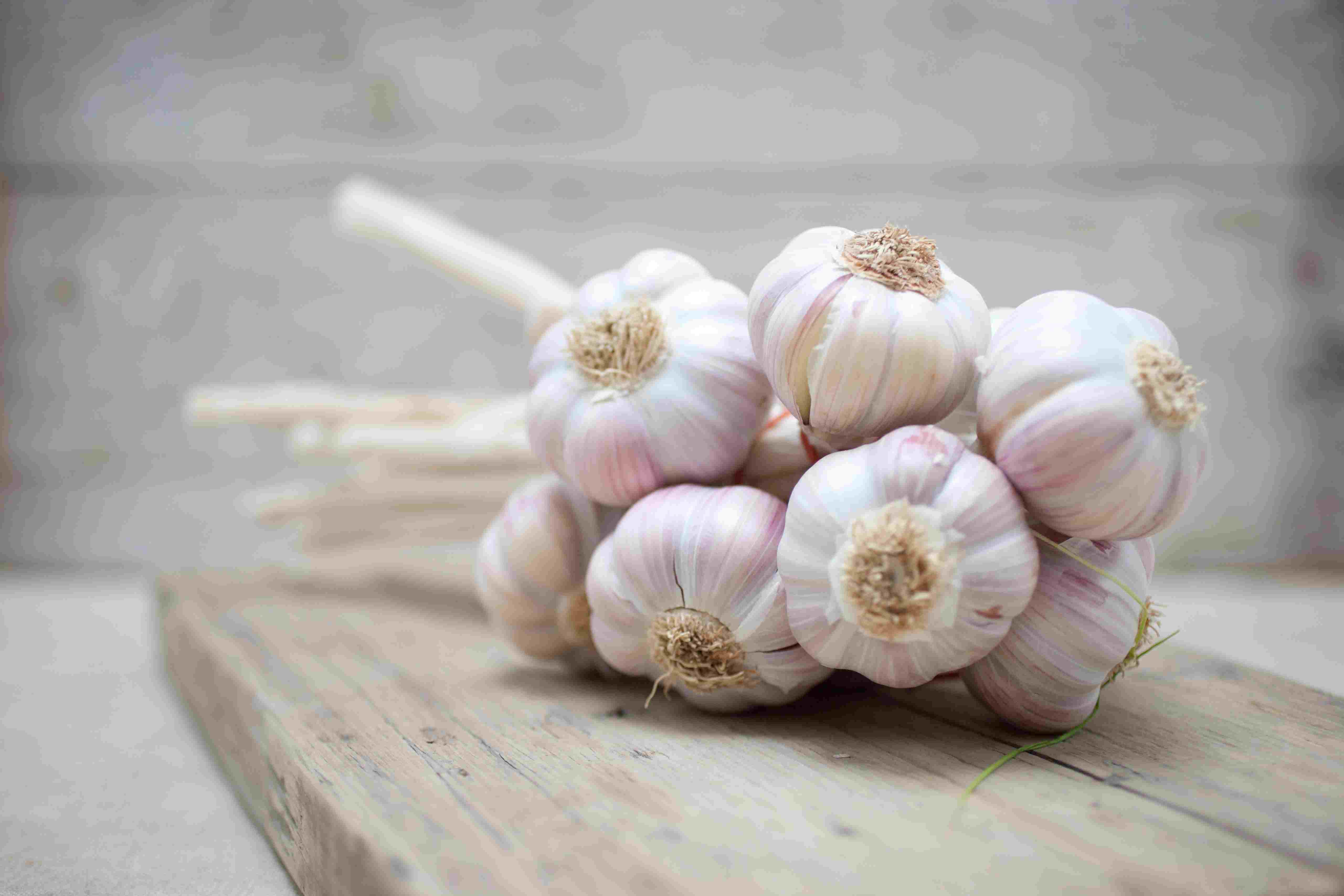Close up of purple garlic bunch