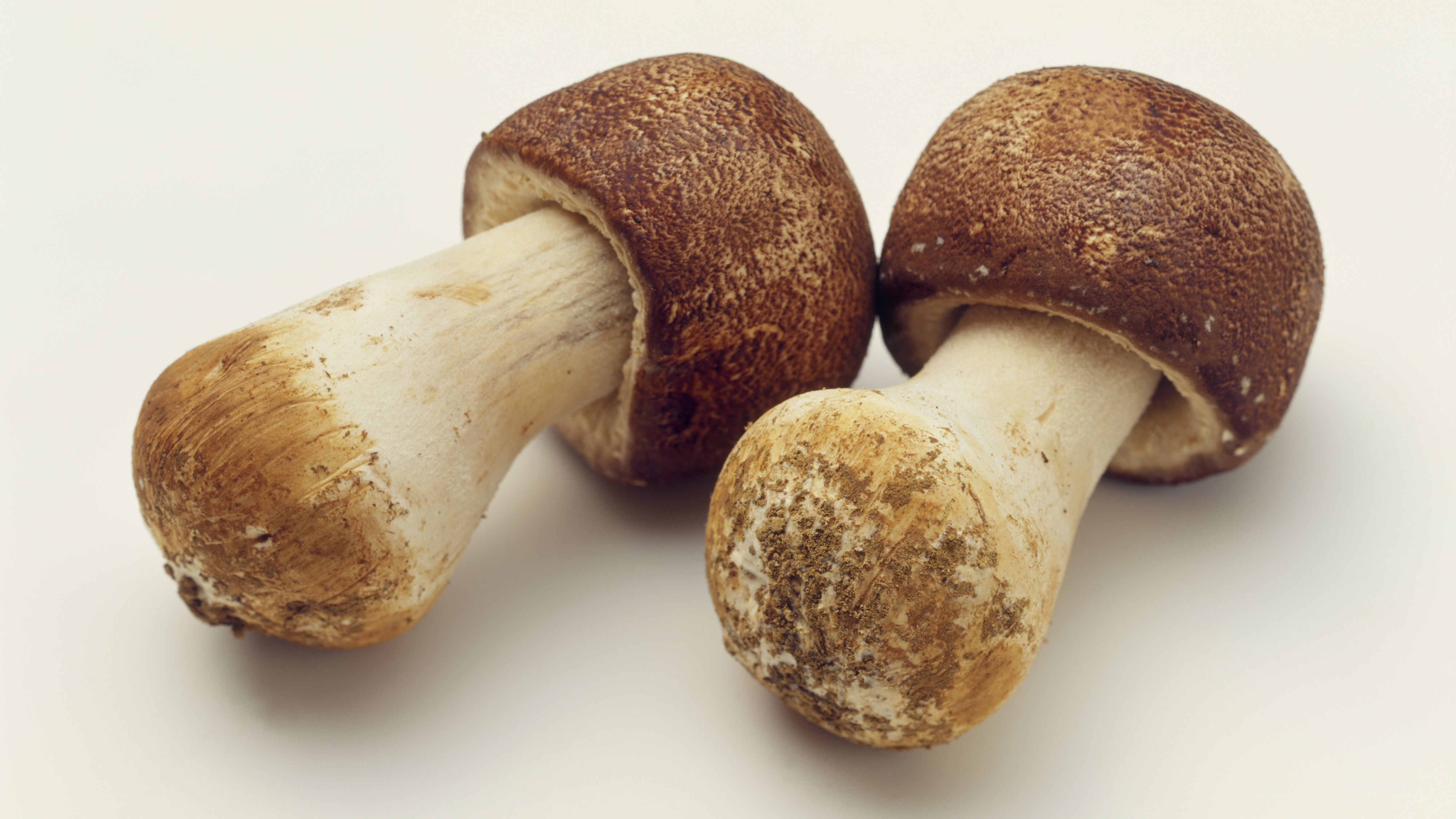 The Uses and Benefits of Agaricus Mushroom