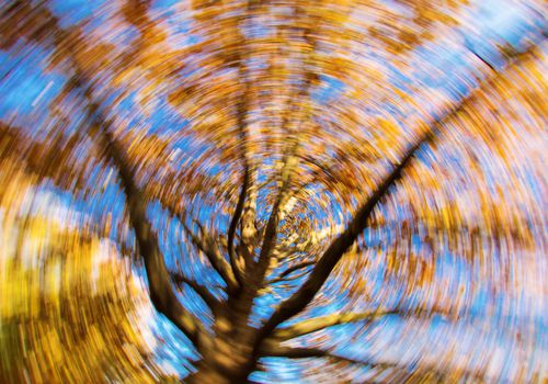 a kaleidoscopic blur of a shot of a tree from a ground perspective
