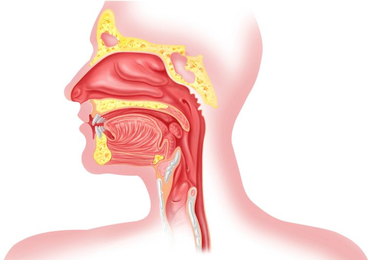 Illustration of the mouth and top of the esophagus