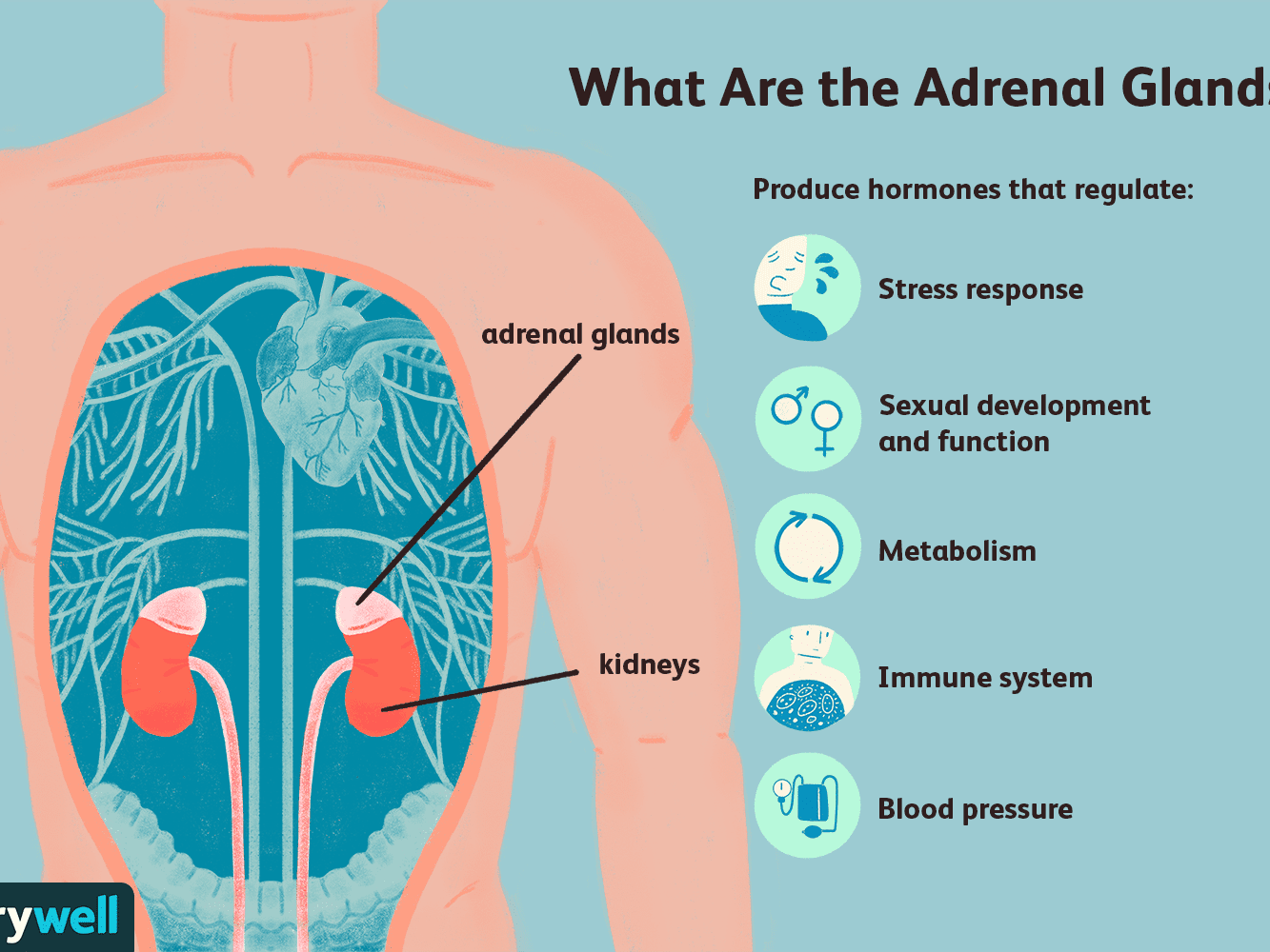 When Lung Cancer Spreads To The Adrenal Glands