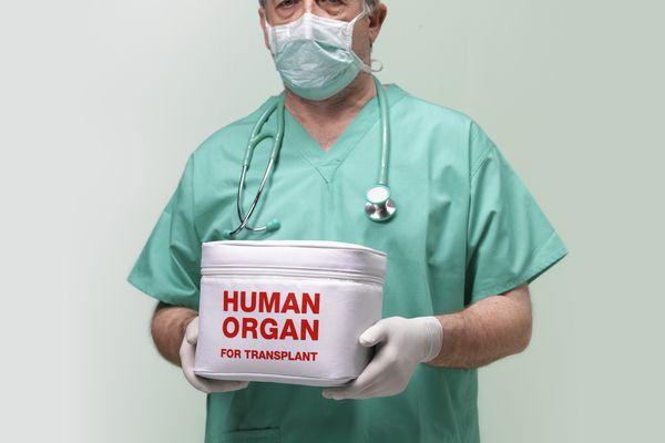 penis transplant