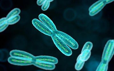 chromosomes closeup