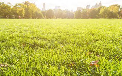 Great Lawn in Sunlight