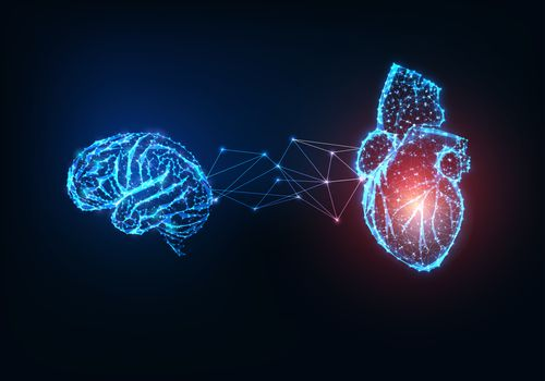 A digital illustration of a brain connected to a heart.