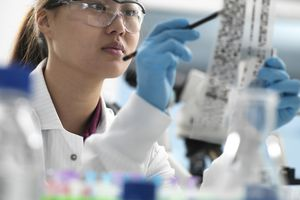 Scientist viewing results of genetic test on DNA autoradiogram in laboratory - stock photo