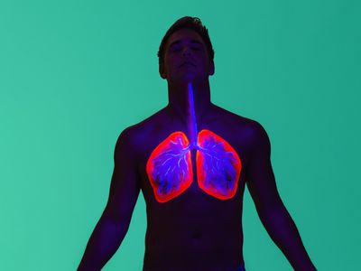 Ultraviolet diagram of lungs during inhalation