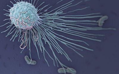 Macrophage Fighting Bacteria