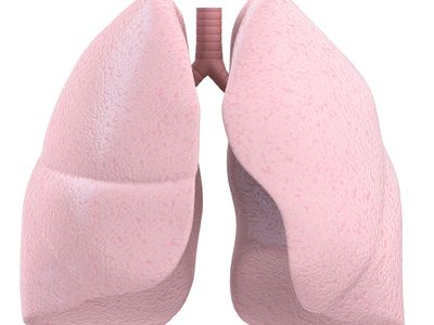 diagram illustrating the location of the hilum in the lung