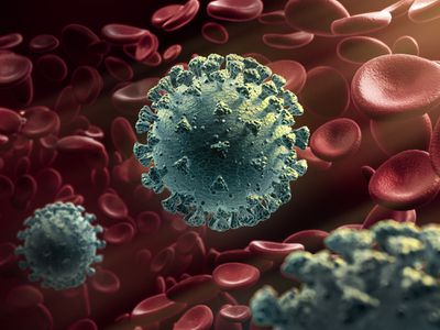 Corona viruses circulate in the blood stream along with red blood cells.