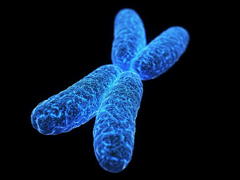 X chromosome, illustration
