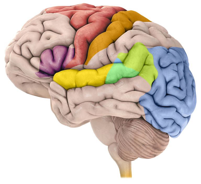 Large Vessel Or Cortical Stroke Overview