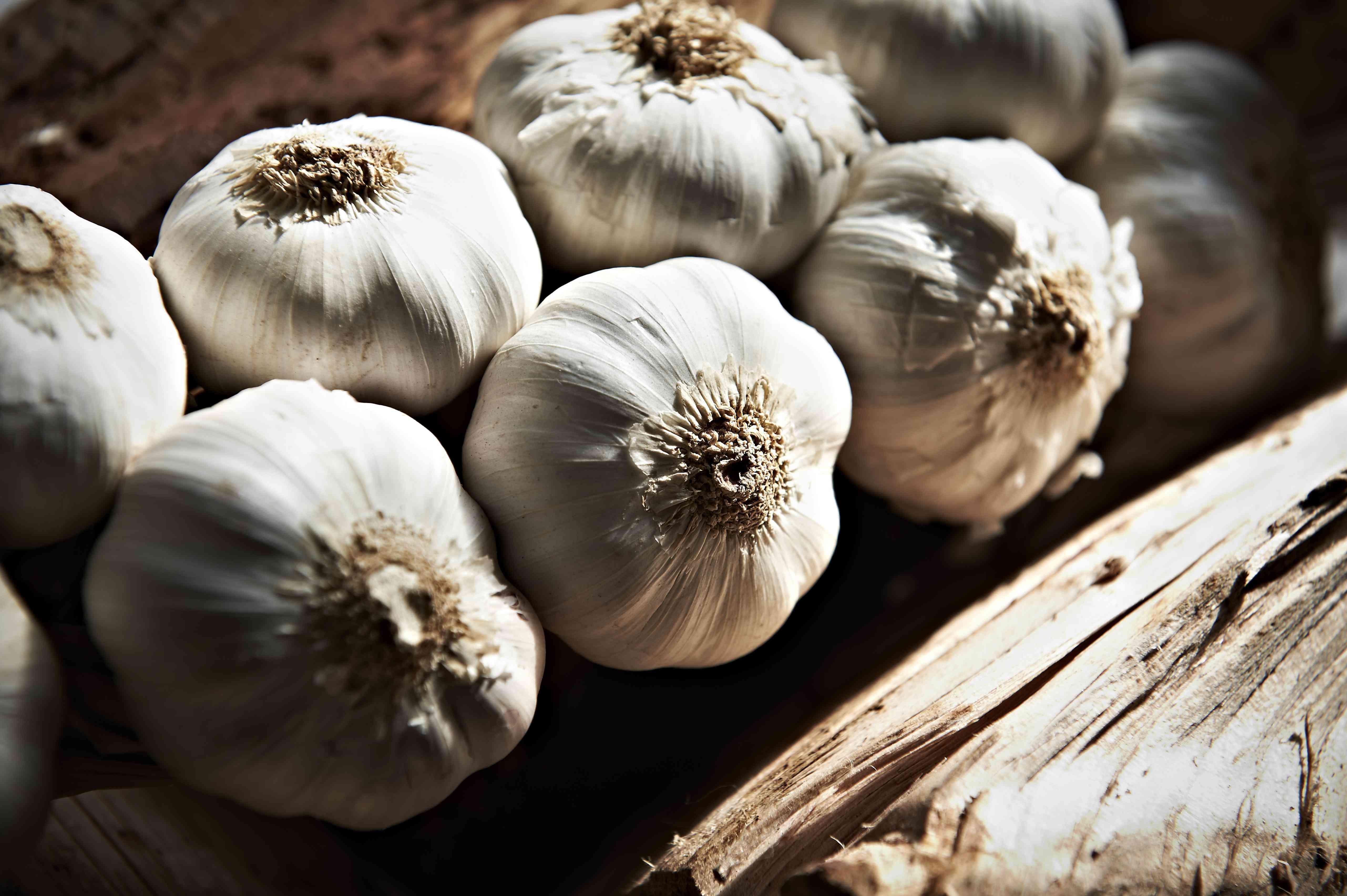 Garlic bulbs close up