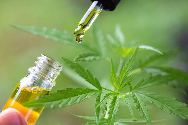 CDB oil from cannabis plant
