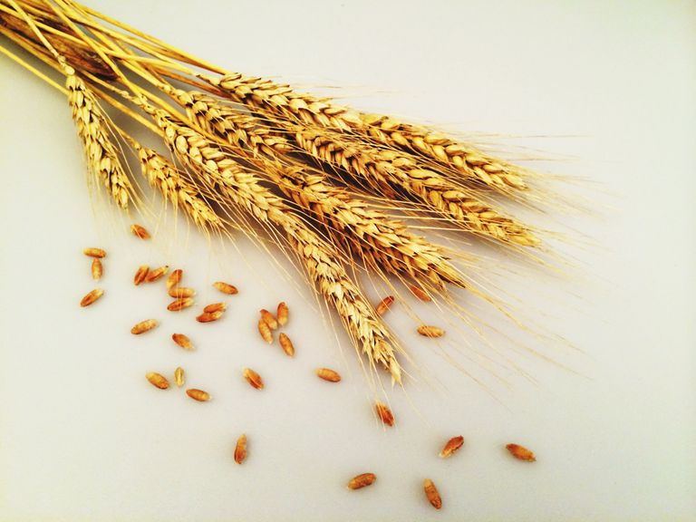 Close-up View Of Wheat