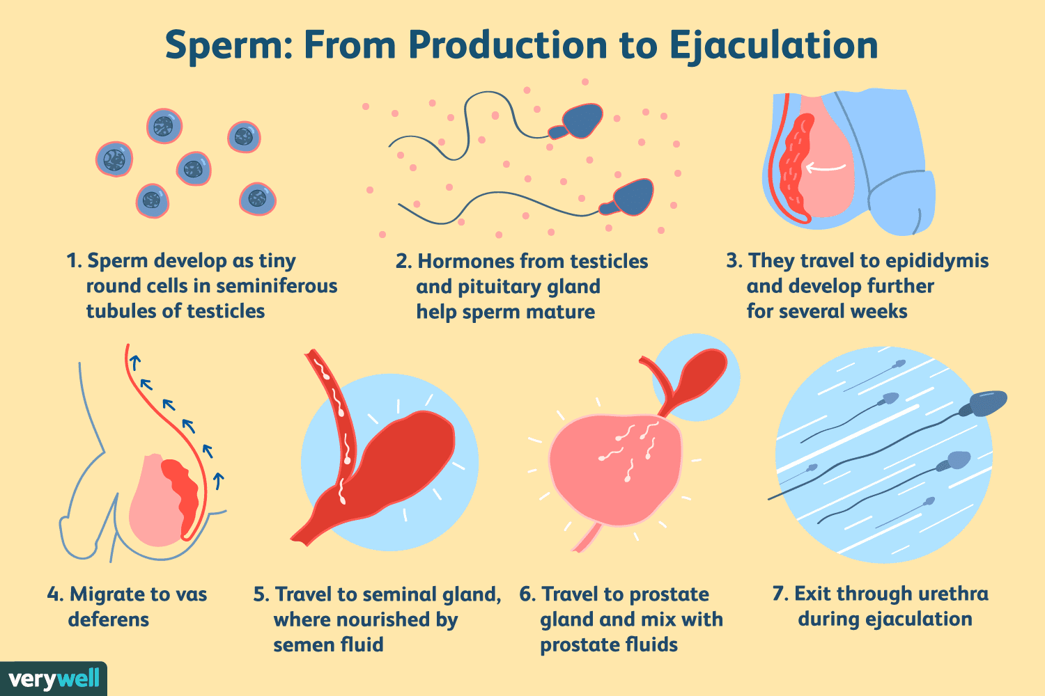 what can make sperm taste better