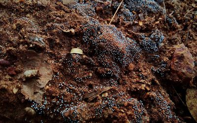 A photo of black fungus growing on wet soil.