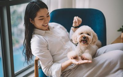 an asian chinese female young adult having bonding time with her pet toy poodle on sofa near the window in living room