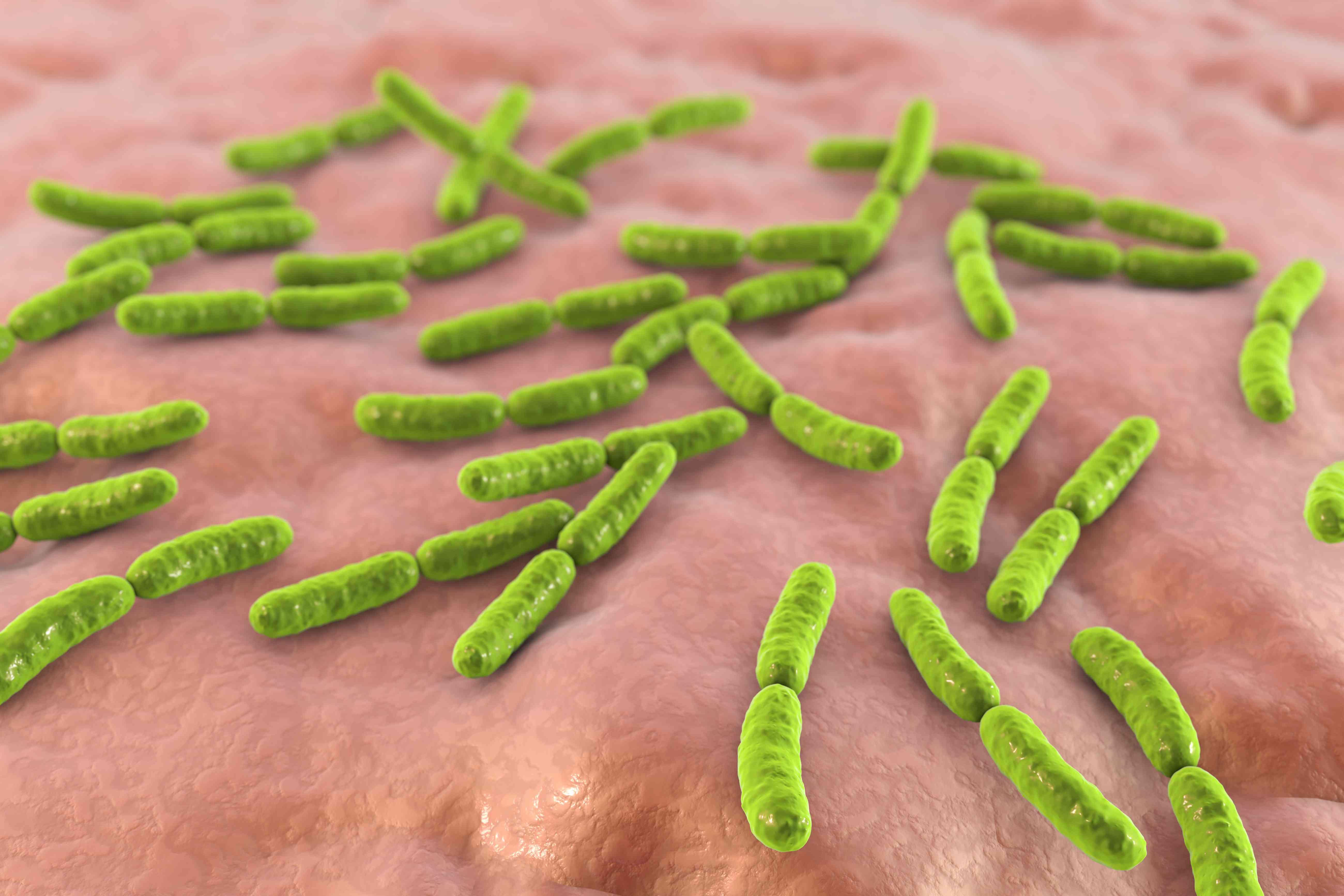 Illustration of Lactobacillus crispatus bacteria
